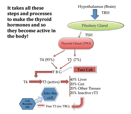 Thyroid Problems Can Be Caused By Poor Diet What You Can Do