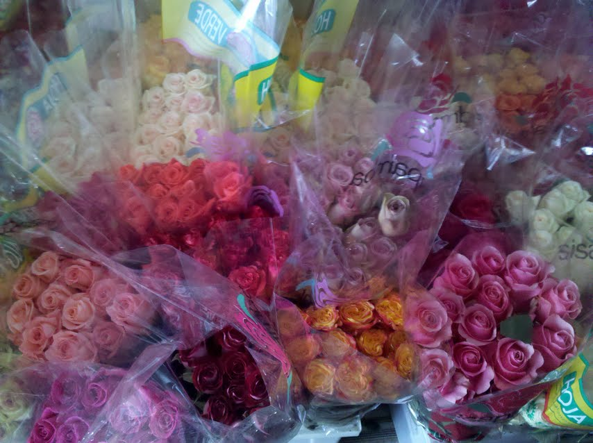 c--users-rickcanale-pictures-roses_in_boston.jpg
