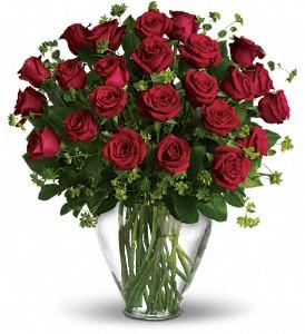 red_roses_in_boston-resized-600.jpg