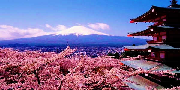Image result for japan cherry blossom