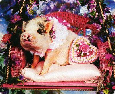 Germany teaching English valentines pig