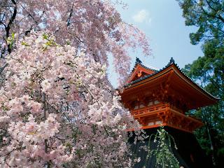 Teach english in japan kyoto pagoda