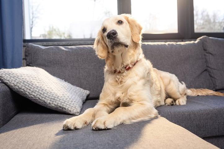 Should Arlington VA Investors Allow Pets in Rentals?