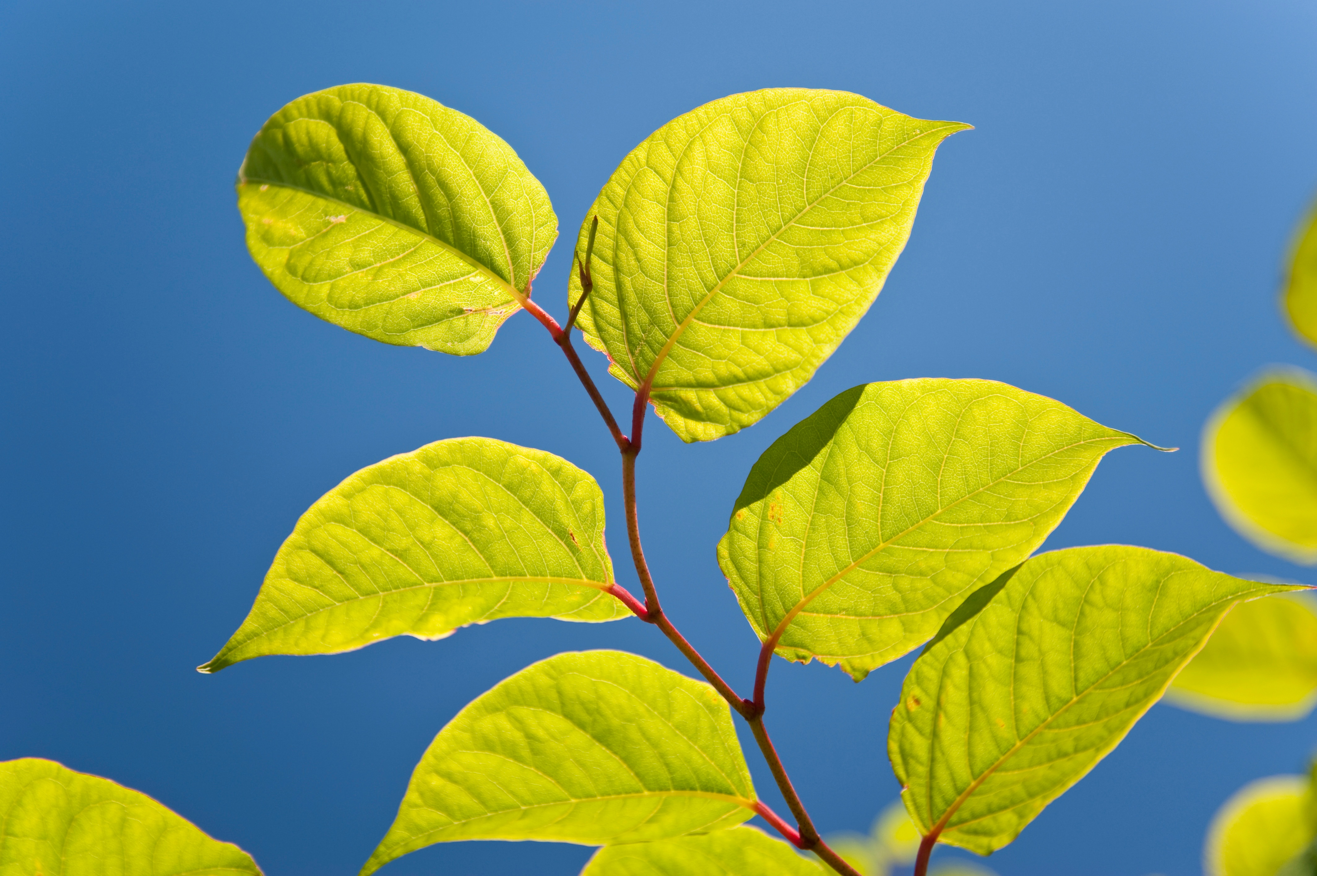 Leaves-in-an-Article-About-Environmental-Grants-From-Keep-America-Beautiful