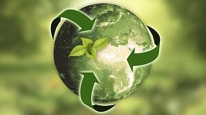 How We're Reducing Our (And Your) Impact On The Environment