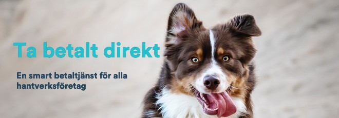 Hundbild med text Optimera_MobilGirot