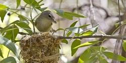 Biological Surveys and Bird Nest Monitoring