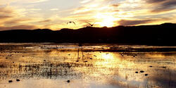 Wetland Delineation: USACE Pioneer
