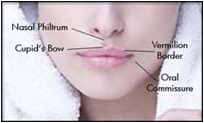 lips-diagram