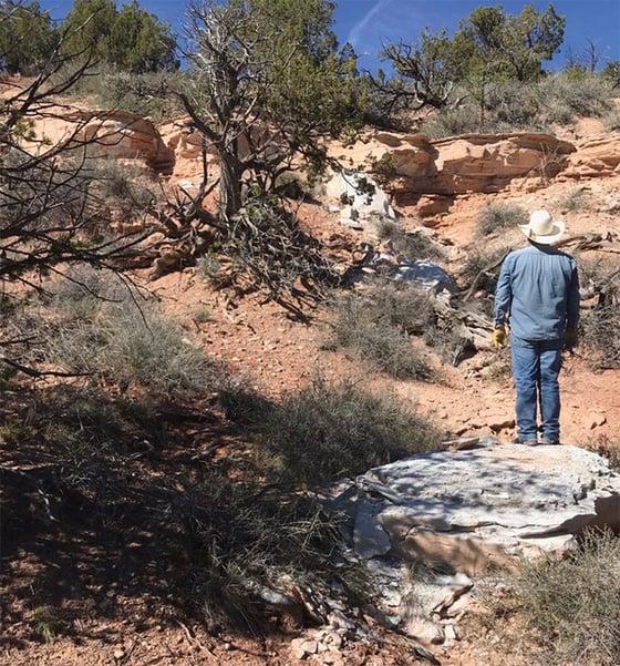 Tufa stone deposit south of Gallup, New Mexico
