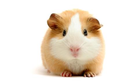 SEO guinea pig