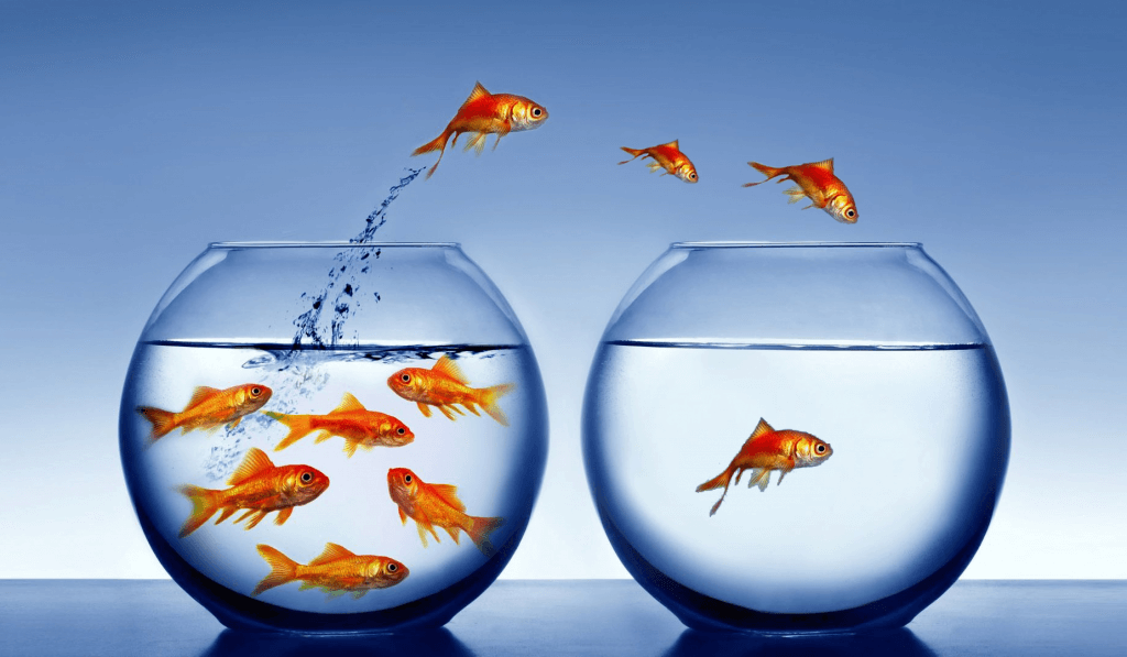 fish_jumping_out_of_bowl-other1-1024x597.png
