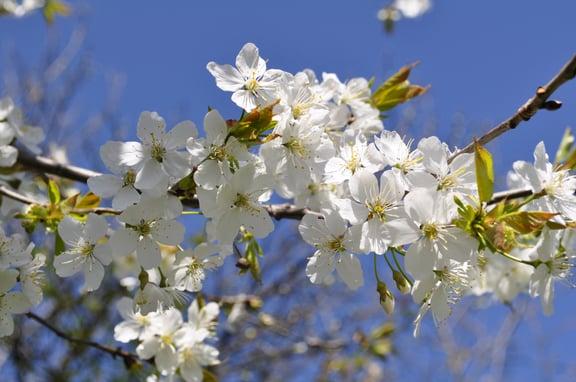 Beautiful_spring_flowers.jpg