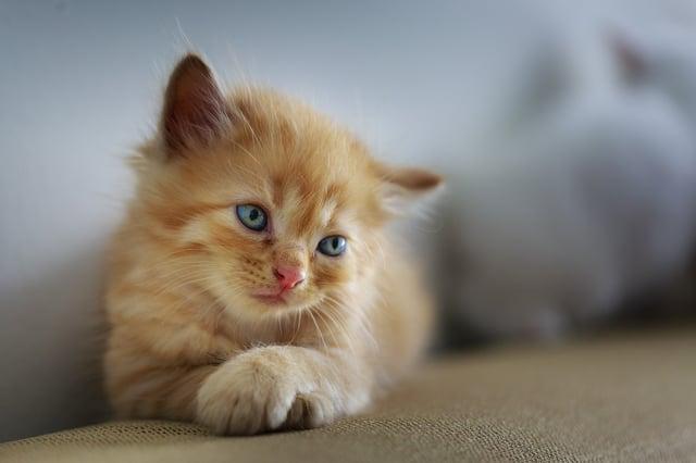 KFC Uses Kittens in Viral Live Stream - Inbound Marketing Highlights