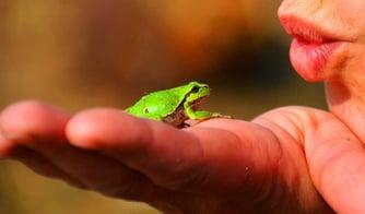 amphibian-amphibians-cute-56003