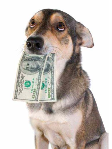 preços passeio do cão