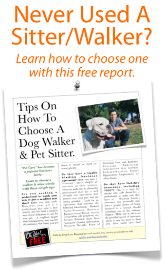 How to find a dog walker and pet sitter
