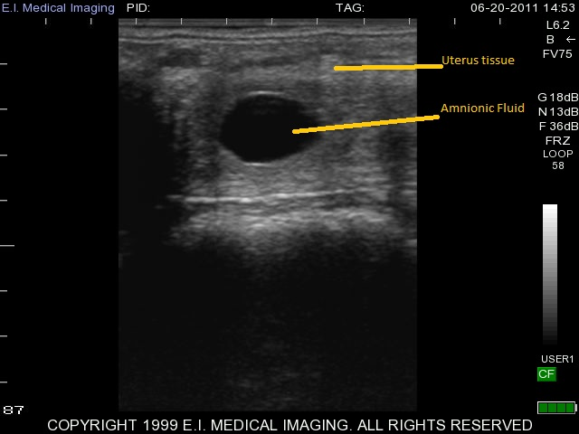 13 day equine pregnancy ultrasound
