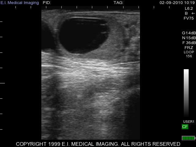 Equine veterinary ultrasound images