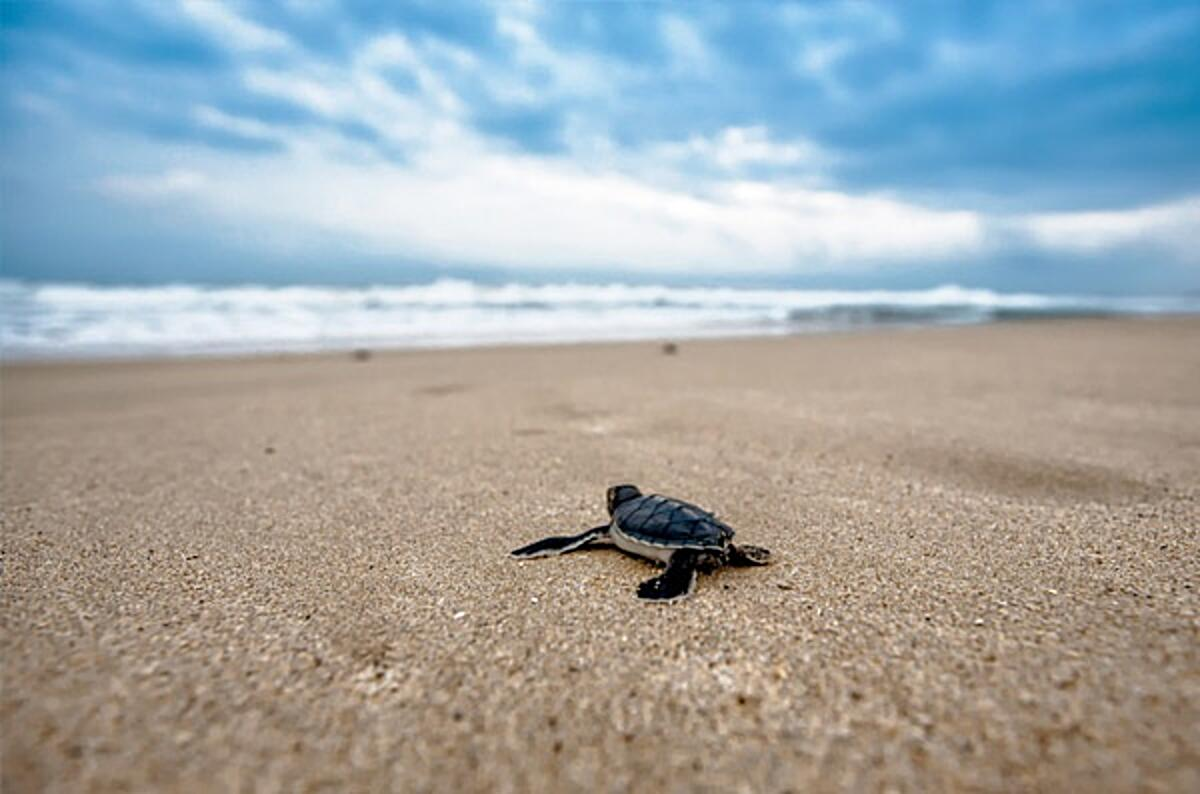 Click the photo of a turtle on a beach to view the Agile Gone Wrong blog post. Image CC0 via JOOINN.