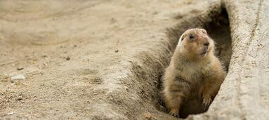 Are You Delivering the Groundhog Day of Customer Experience