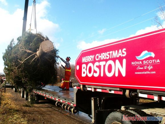 365 things to do in boston christmas tree boston common