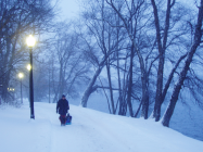 Jamaica Plain sledding