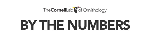 Like Birds? Are you Familiary with The Cornell Lab of