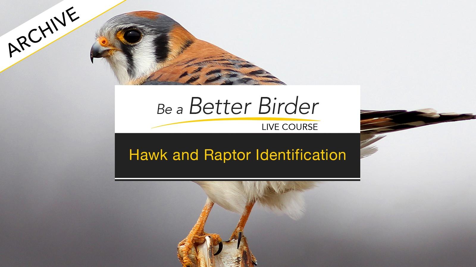 BirdAcademy-raptor-thumbnail-course 2.jpg