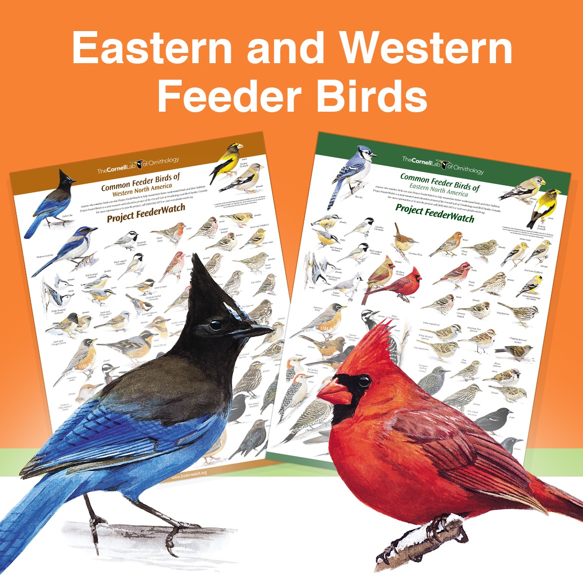 Feederwatch_poster-2.jpg