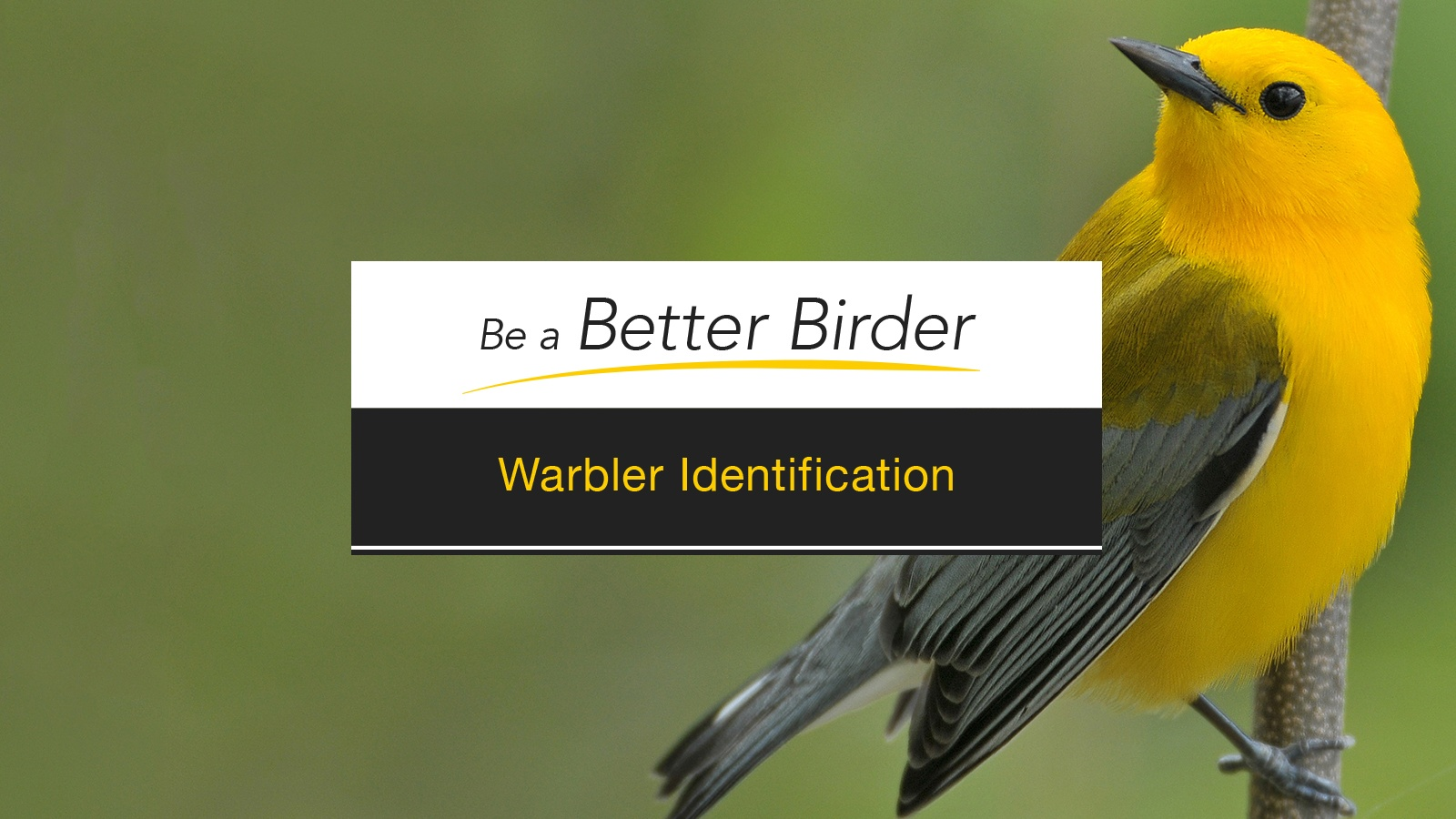 Warbler_course_ID-thumb