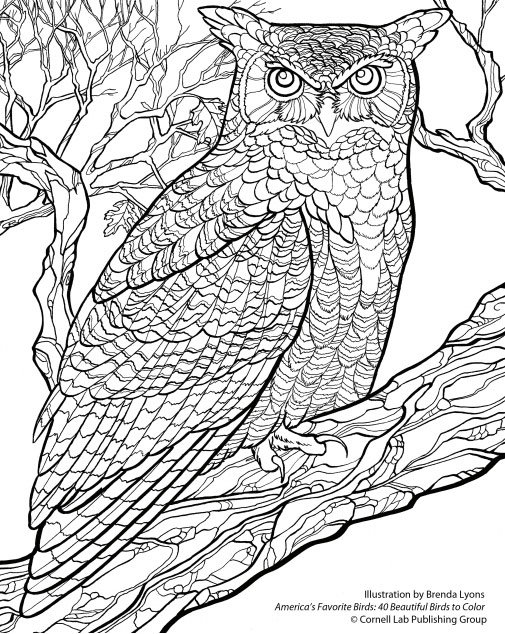 great horned owl coloring pages - photo#12