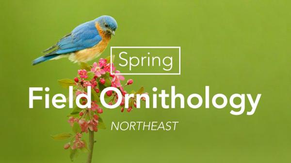 SpringFieldOrnithology-16x9-674x379 PNG.png