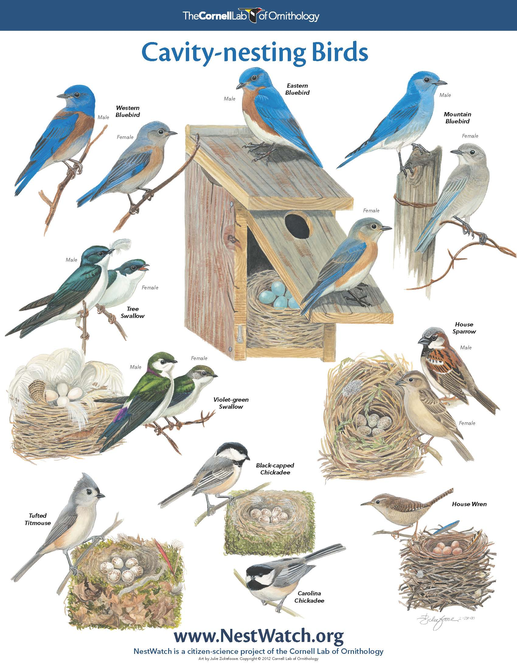 All types of birds pictures to pin on pinterest pinsdaddy for Different types of birdhouses