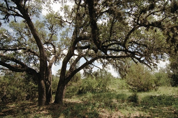 Texas Hill Country Land - Homesite #1048