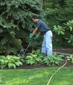 Tree And Shrub Fertilizer Surface Vs Subsurface Applications
