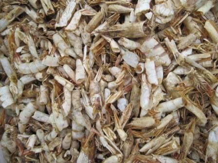 Shrimp Shell Food Waste turned into bioplastic