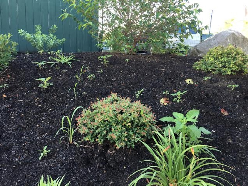 How To Weed Your Garden Like A Pro Part I