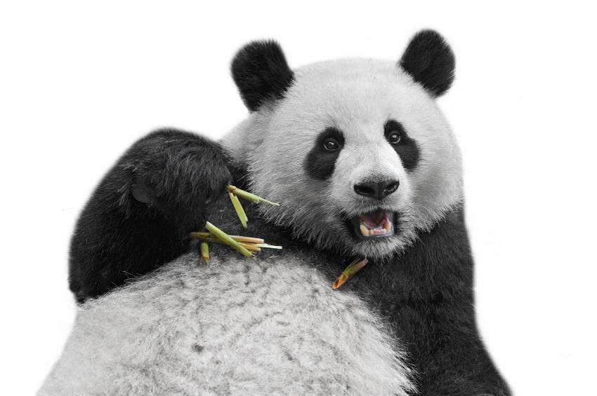 google panda 4.2 ¿Estás preparado para Google Panda 4.2?
