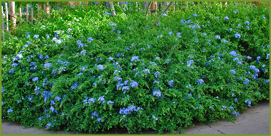 shrubs that thrive in partial sun, Natural flower