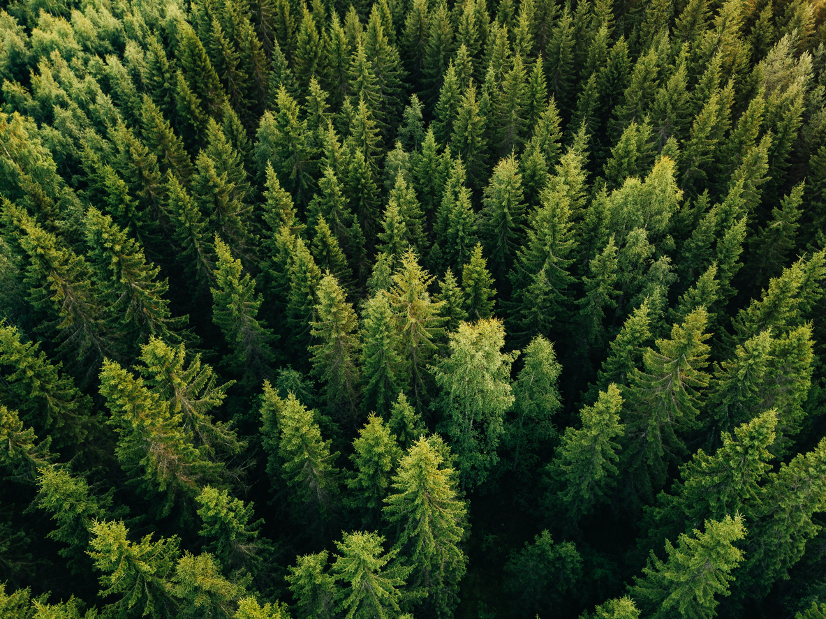 Do You Create Enough Evergreen Content and Topical Content?