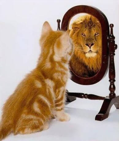 superbia-gatto-leone
