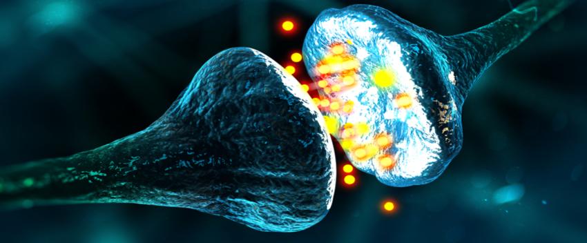proviron hardening effects