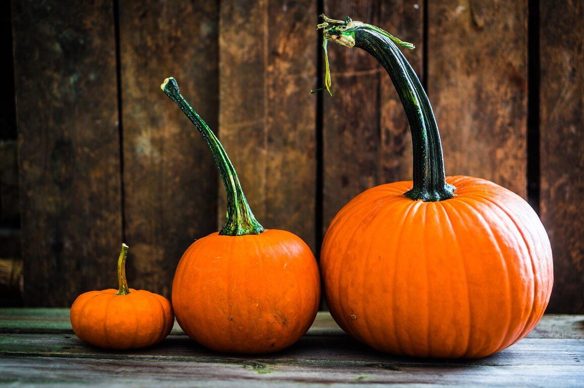 pumpkins_fall.jpg