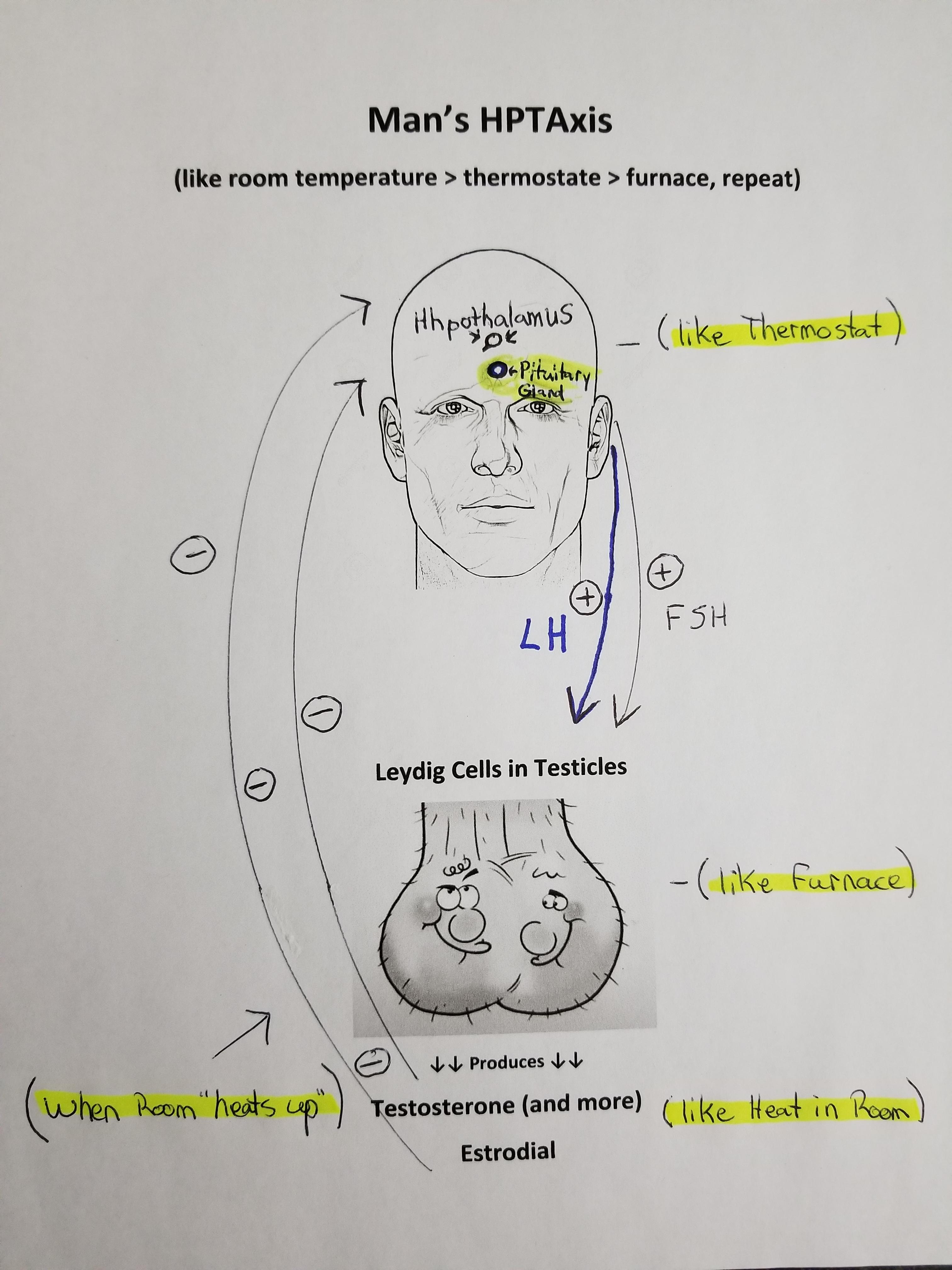 7+ Reasons Men on TRT NEED to Consider HCG