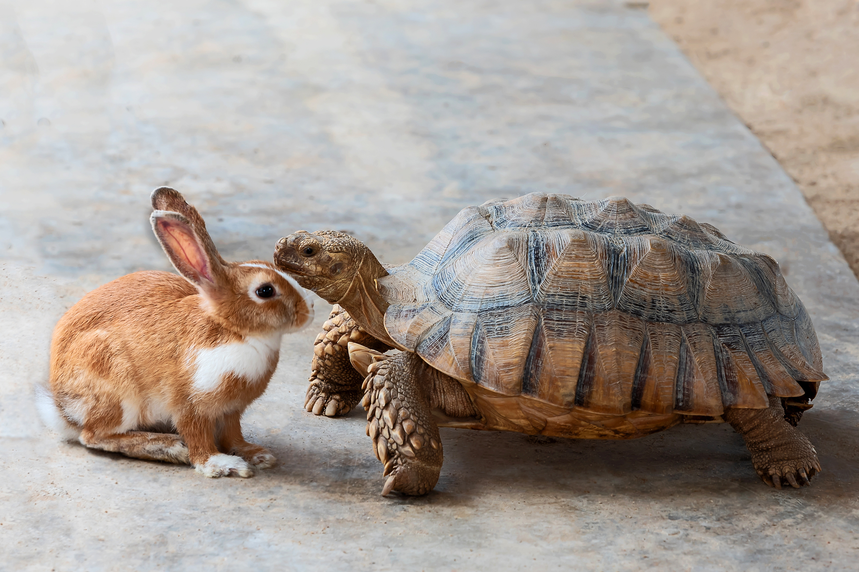 A tortoise and hare look at one another.