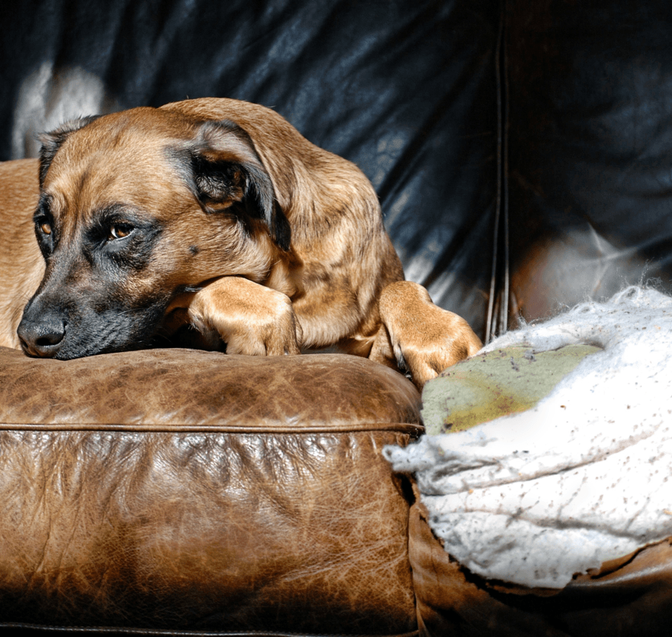 Home Decorating: What Not to Do Dog Image
