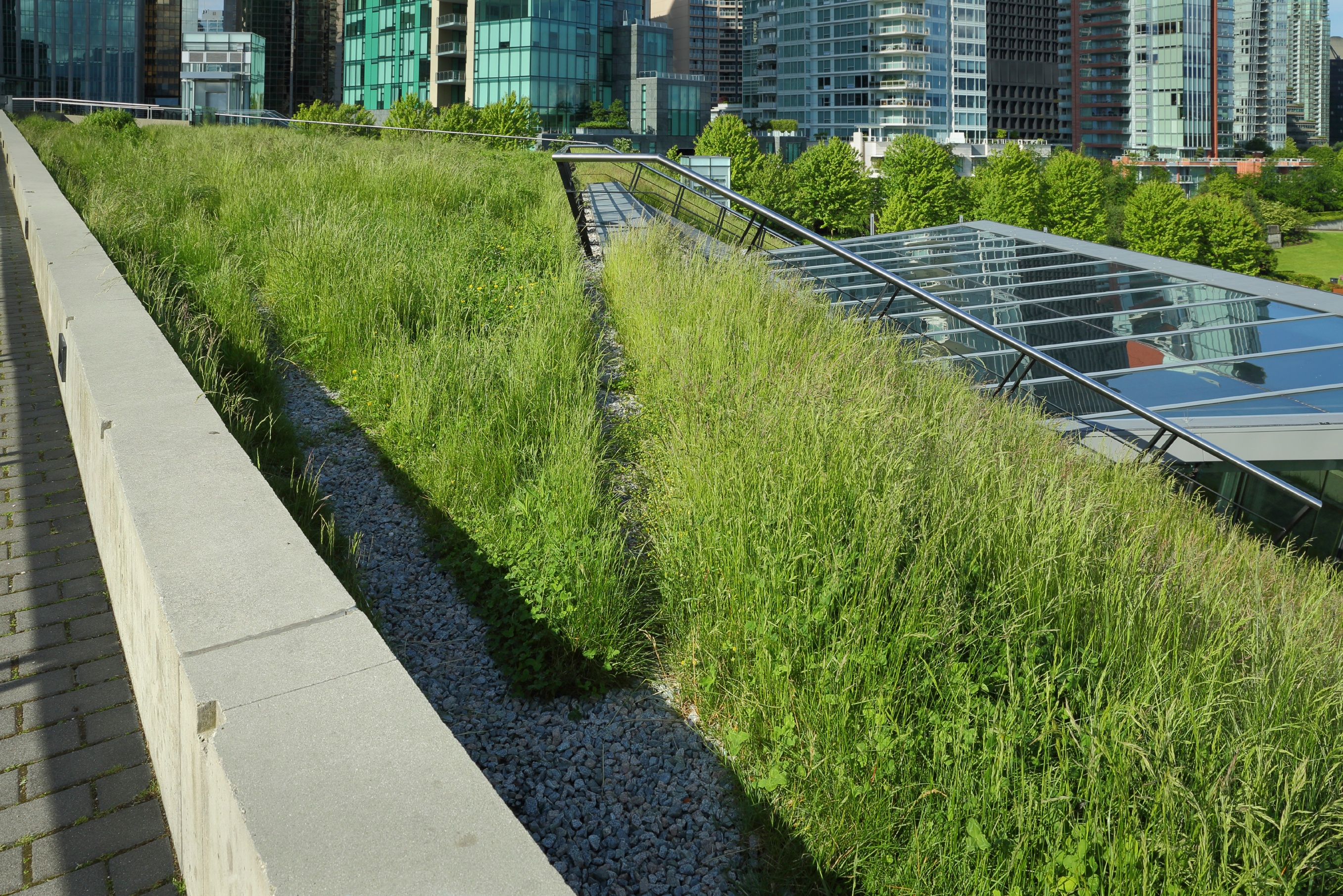 Grass-Growing-on-a-Green-Roof-000041128570_Large.jpg