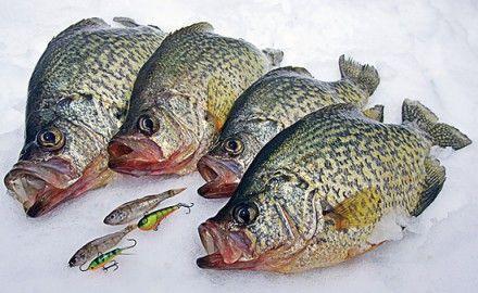 Crappie ice fishing