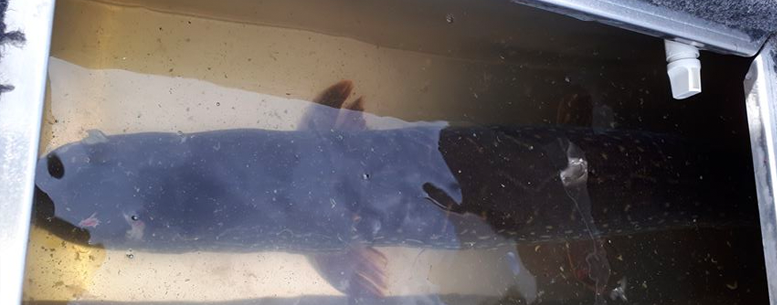 Fish Livewell
